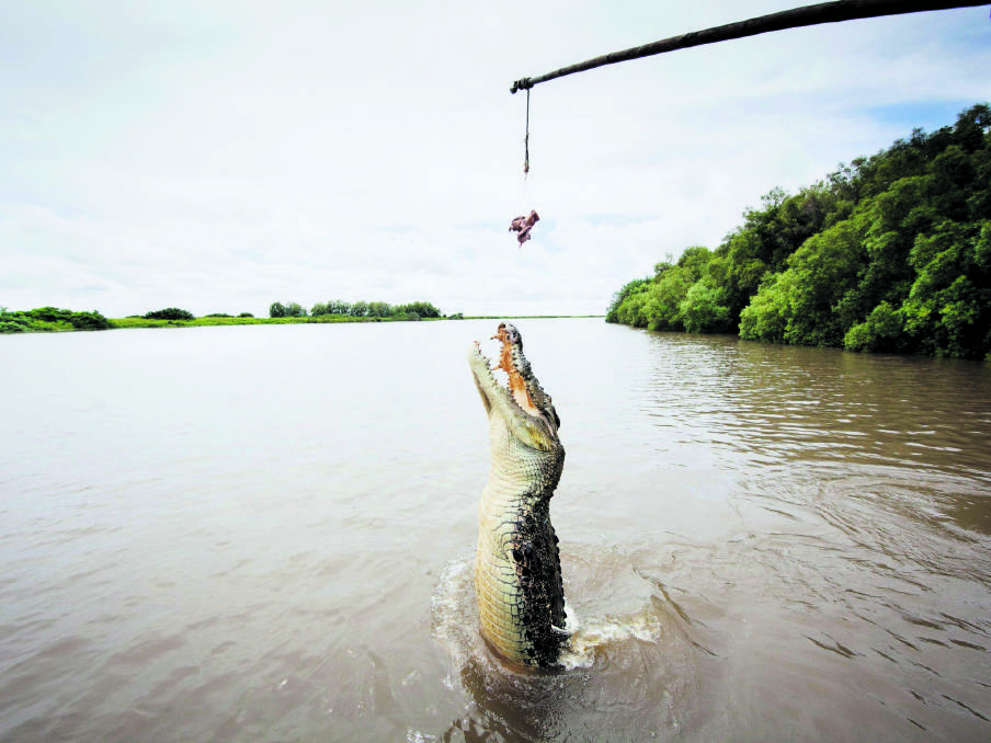 The jumping crocs of the Adelaide River. The perfect day trip when in Darwin. Picture: Supplied
